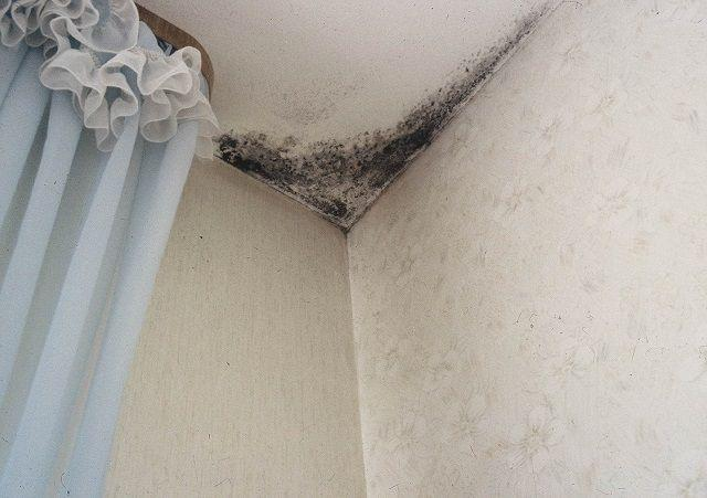Эффективная вентиляция в ванной поможет не допустить подобной картины