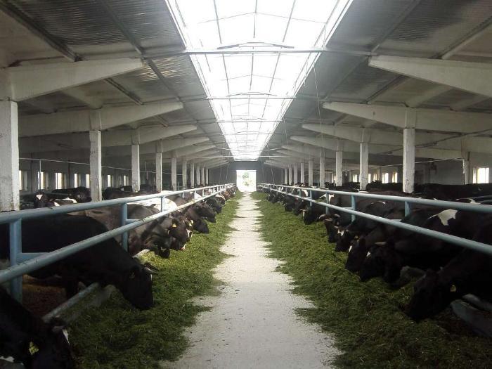 Качественная вентиляции коровника - отличные результаты животноводства