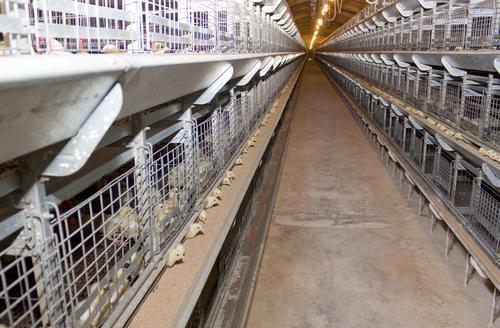 Вентиляция зоны предубойного содержания скота