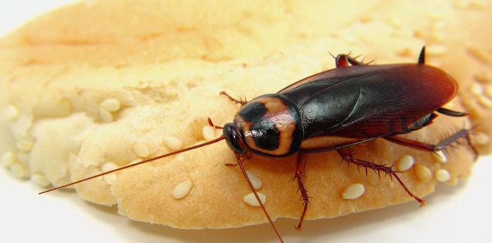 Что делать, если тараканы лезут от соседей