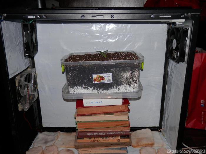 """Насколько эффективна вентиляция """"расскажут"""" растения с миниоранжерее"""