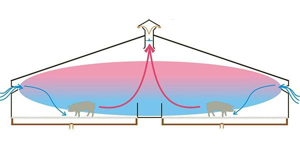 Обустройство вентиляции в свинарнике