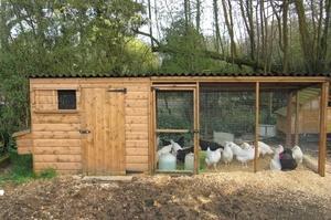 Нюансы постройки сарая для свиней или птиц