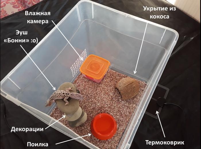 Террариум для эублефара