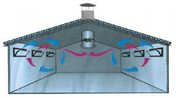 Поперечная вентиляционная система в свинарнике