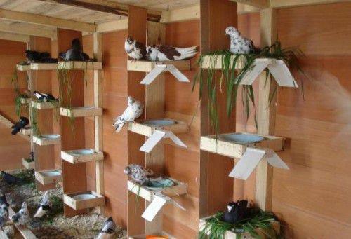 Гнезда и кормушки в голубятне