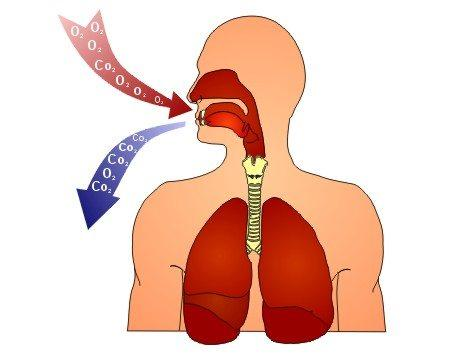 Схема дыхания человека