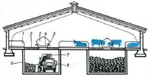 Устройство коровника с беспривязным содержанием скота