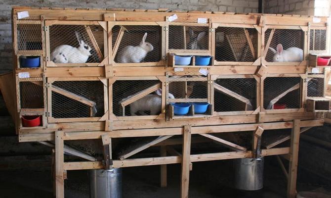 Требования к условиям содержания кроликов