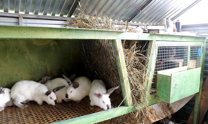 Какой должен быть сарай для содержания кроликов