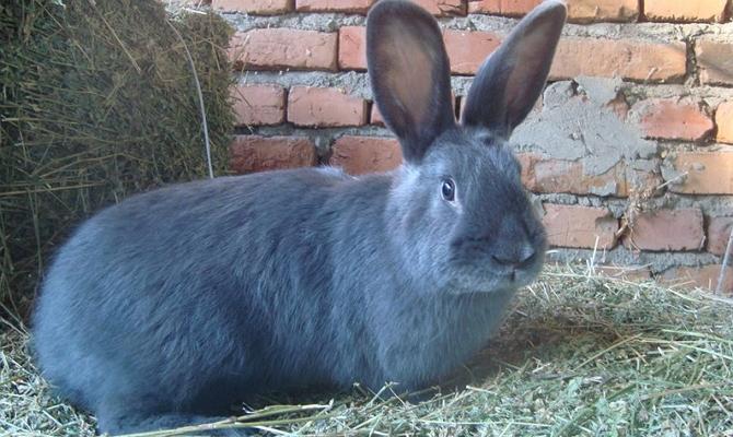 Основные требования к уходу за кроликами