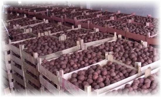 картошка в ящиках