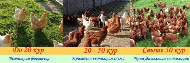 Выбор схемы в зависимости от поголовья кур